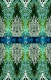 peacock6
