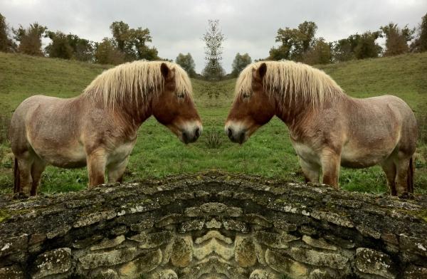 1HORSE&WALL