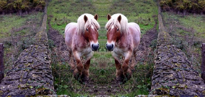 2HORSE